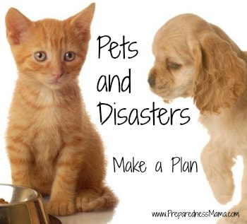 Pets and Disasters: Make a Plan