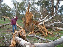 Lightning Safety Tree