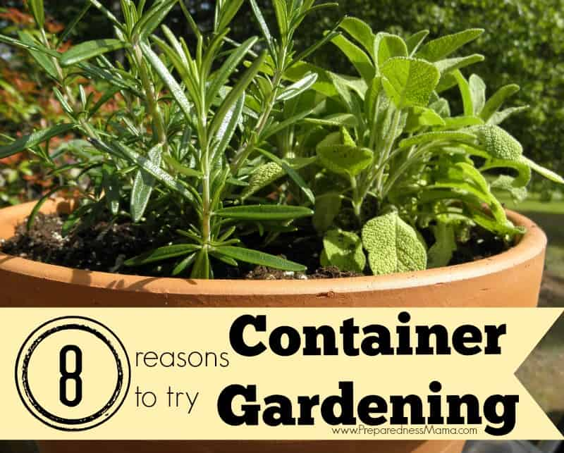 8 Reasons to Try Container Vegetable Gardening PreparednessMama