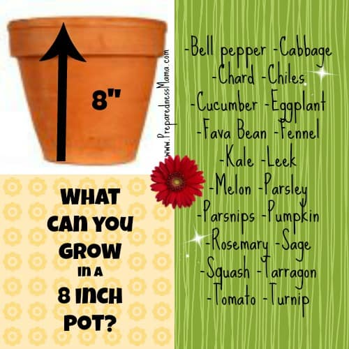 Planting depth revealed: What Can You Grow in an 8 inch pot? | PreparednessMama