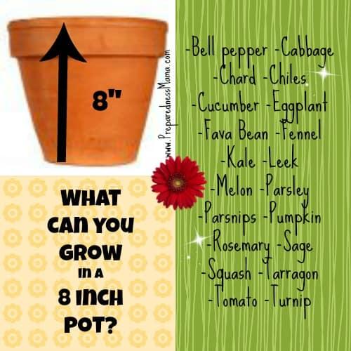 planting depth 8 inch