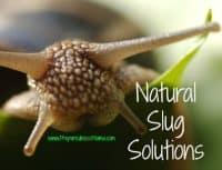 Natural Slug Solutions