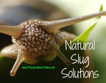 Natural Slug Solutions