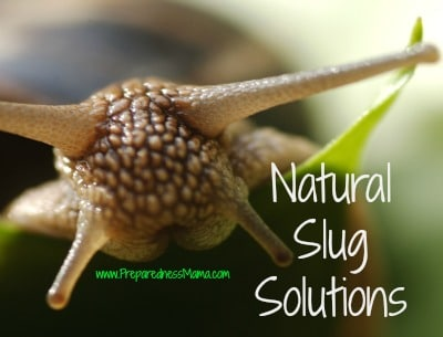 Slug It Out Slug Solutions Garden Primer Series