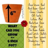 planting depth 6 inch