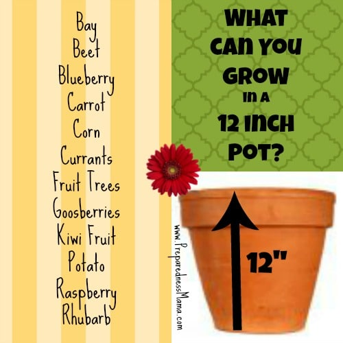 Planting depth revealed: What can you grow in a 12 inch container? | PreparednessMama