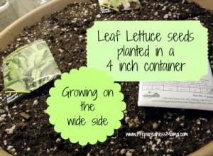 planting depth 4 inch