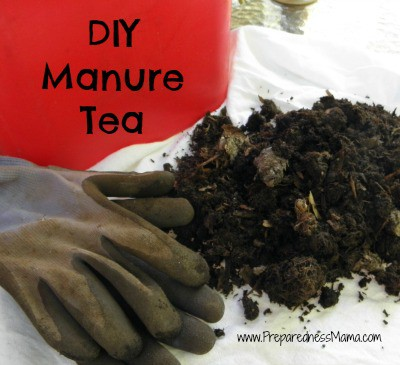 DIY Manure Tea