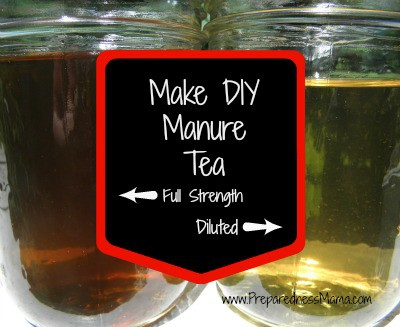 Dilute your manure tea