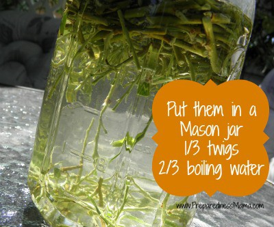 Make Willow Water Rooting Hormone by placing cuttings in water