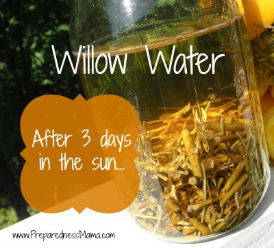 Willow Rooting Hormone, strain after 1-3 days | PreparednessMama
