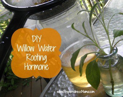 Make DIY Willow Water Rooting Hormone | PreparednessMama.