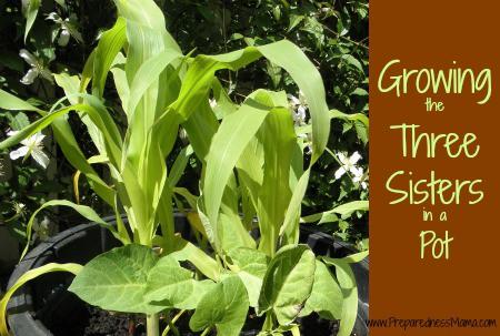 Growing three sisters in a pot | PreparednessMama