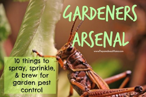 Gardeners Arsenal: 10 Things to Spray, Sprinkle and Brew for Organic Pest Control : PreparednessMama