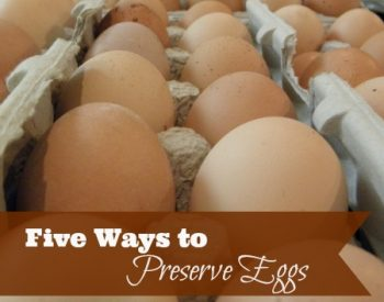 The best part of about summer is the abundance of fresh eggs. Grow your own or get them from a friend, these five ways to preserve eggs will make sure they are always on hand | PreparednessMama