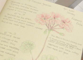 geranium garden journal entry
