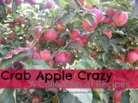Crab Apple Recipes | PreparednessMama