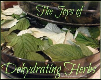 The Joys of Dehydrating Herbs - 5 Methods to try | PreparednessMama
