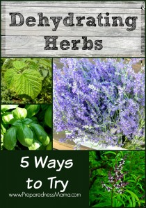 5 Easy ways to begin dehydrating herbs at home | PreparednessMama