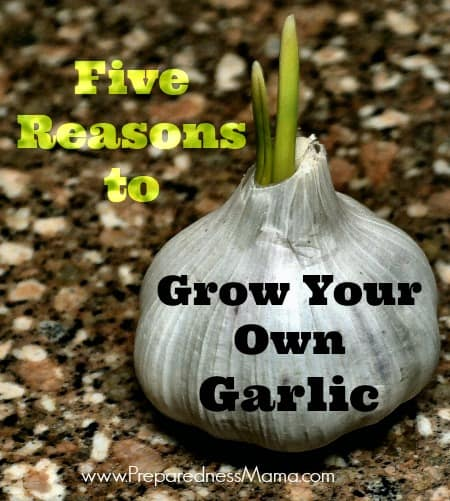 Five Reasons to Grow Your Own Garlic