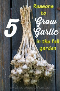 5 Reasons to grow garlic in your fall garden | PreparednessMama