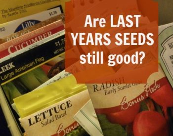 How to test old seeds for viability | PreparednessMama