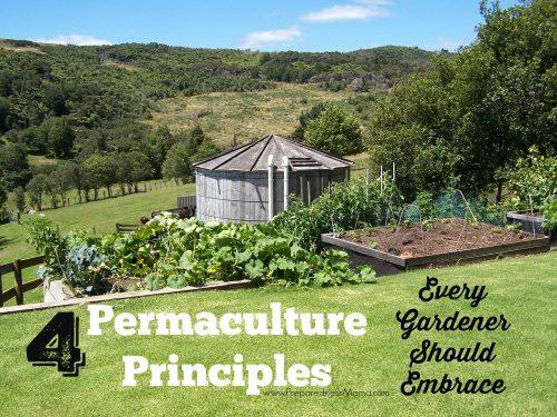 4 permaculture principles every gardener should embrace | PreparednessMama.com