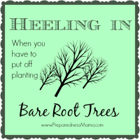 Heeling in bare root trees when you have to put off planting | PreparednessMama