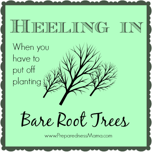 Heeling In Bare Root Trees