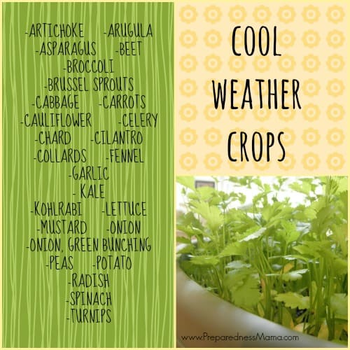 It's time to plant cool weather crops | PreparednessMama