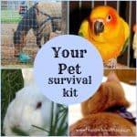 Create a Pet Survival Kit