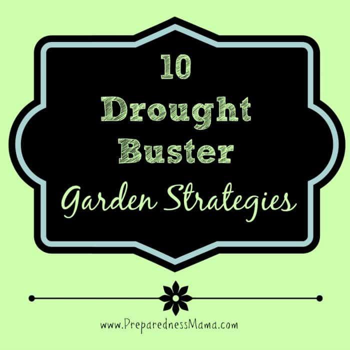 10 Drought Buster Garden Strategies