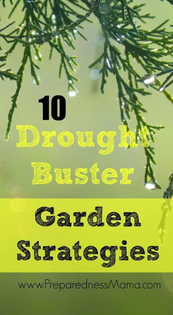 10 Drought Buster Garden Strategies for any yard | PreparednessMama