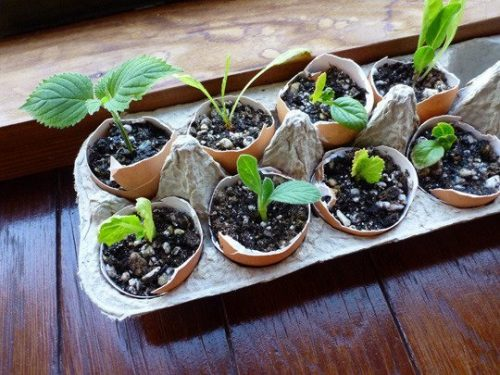 Eggshell seed pots from Apartment Therapy | PreparednessMama