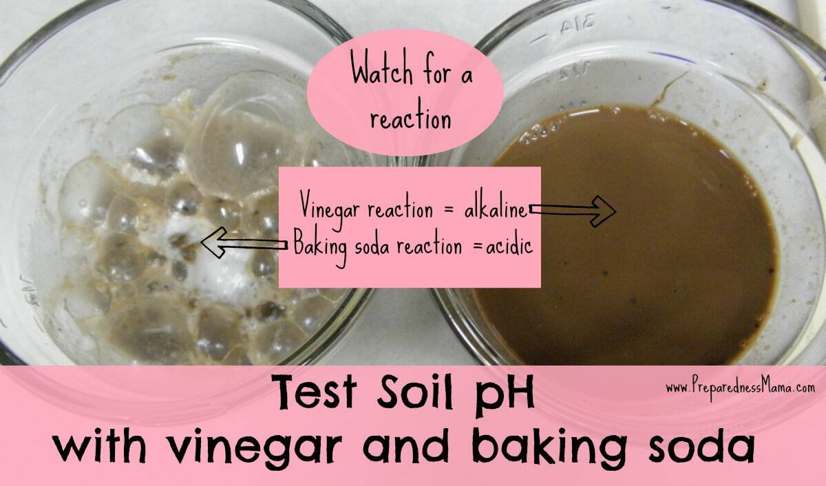 Test soil pH with vinegar and baking soda | PreparednessMama