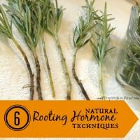 6 Natural Rooting Hormone Techniques | PreparednessMama
