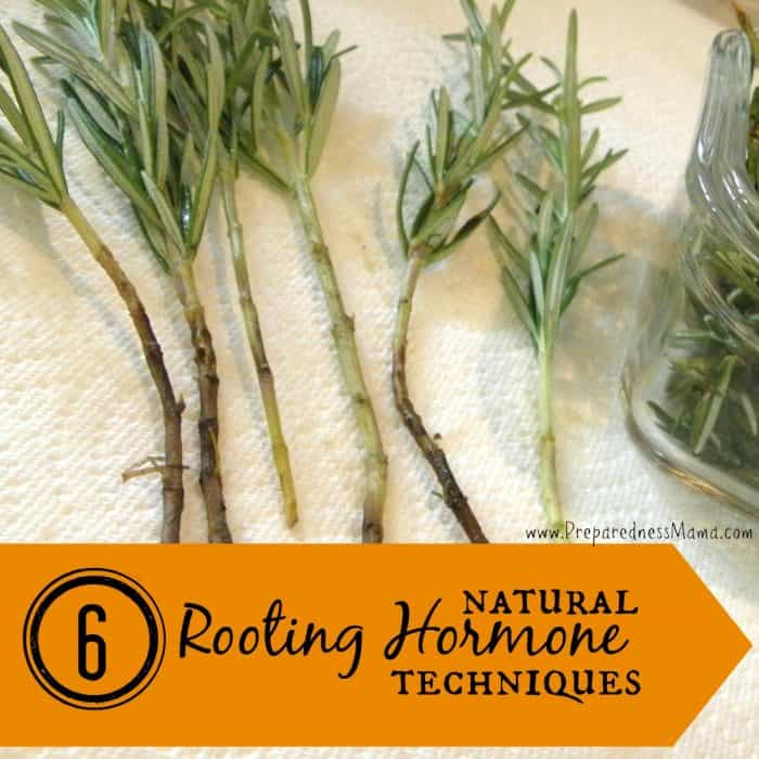 6 Ways to Make Natural Rooting Hormone