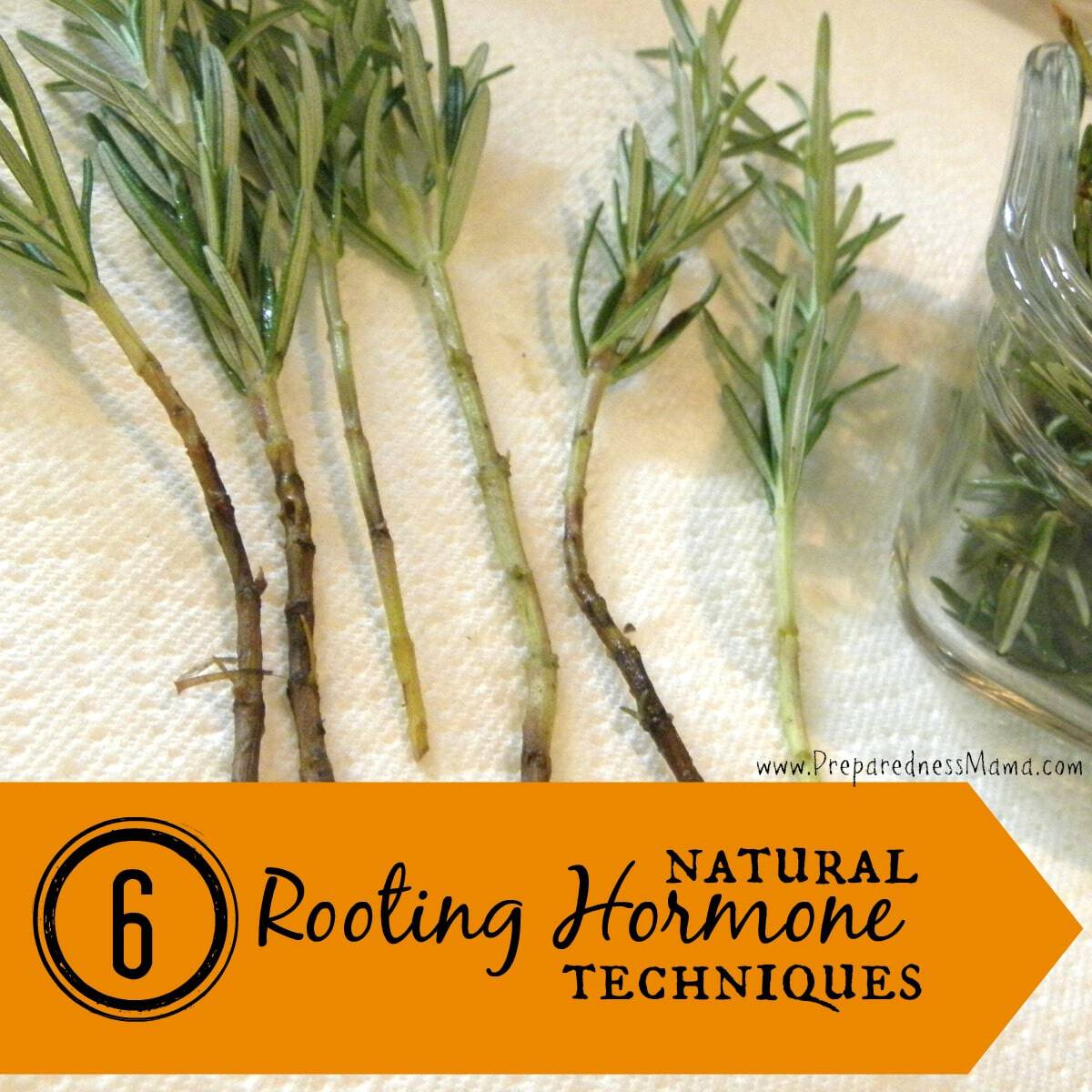 6 Ways to Make Natural Rooting Hormone | PreparednessMama