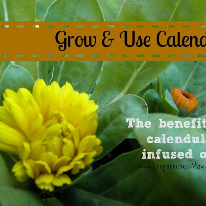Growing and Using Calendula – The Benefits of Calendula Oil
