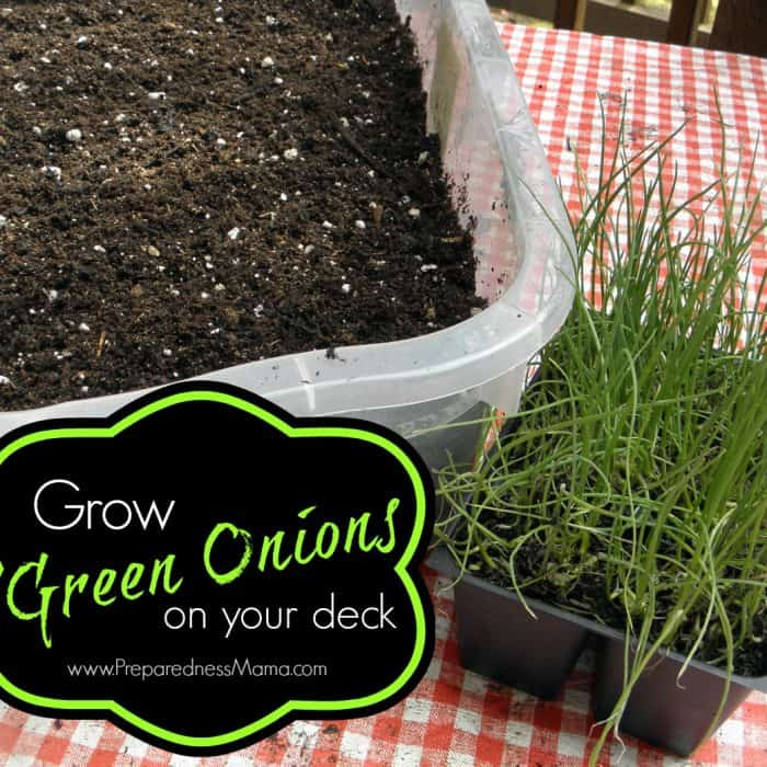 Grow green onions on your deck and save a bunch of money | PreparednessMama