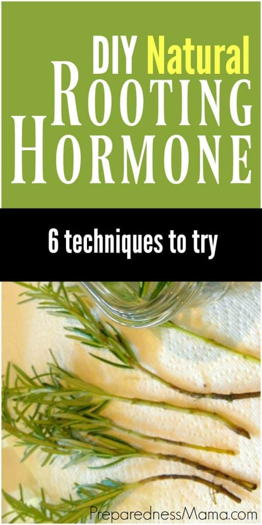 These 6 natural rooting hormone techniques are easy to do. You already have them around your house! | PreparednessMama