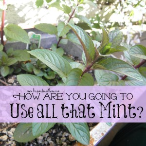 15+ Versatile Uses for Mint | PreparednessMama