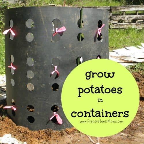 Grow potatoes in containers | PreparednessMama