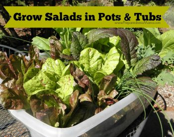 Grow Salads in Pots & Tubs