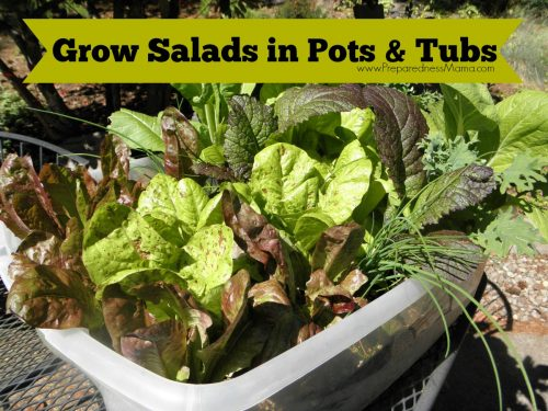 How to Grow Salads in Pots & Tubs. You can have fresh salad fixings within easy reach | PreparednessMama