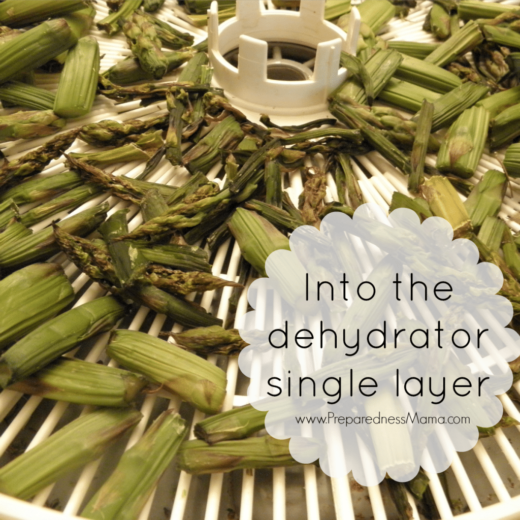 Dehydrating asparagus - place the pieces on the dehydrator trays in a single layer | PreparednessMama