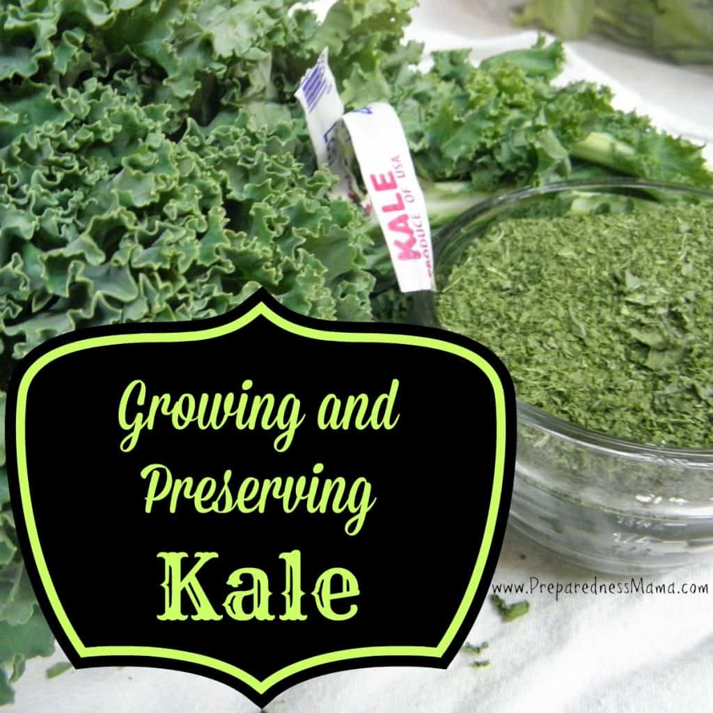 Growing & preserving kale | PreparednessMama