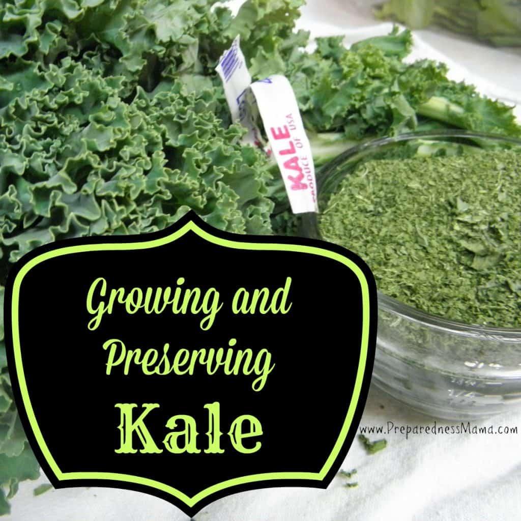 Growing & preserving kale | PreparednessMama