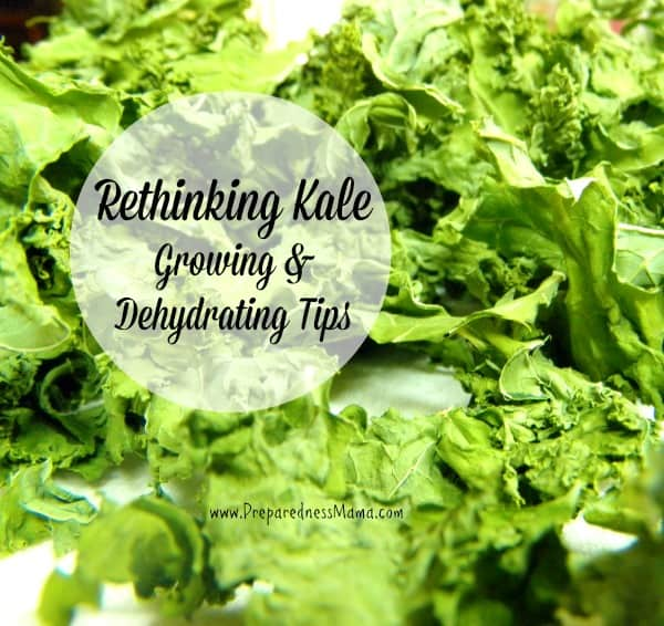 Kale growing & dehydrating tips | PreparednessMama