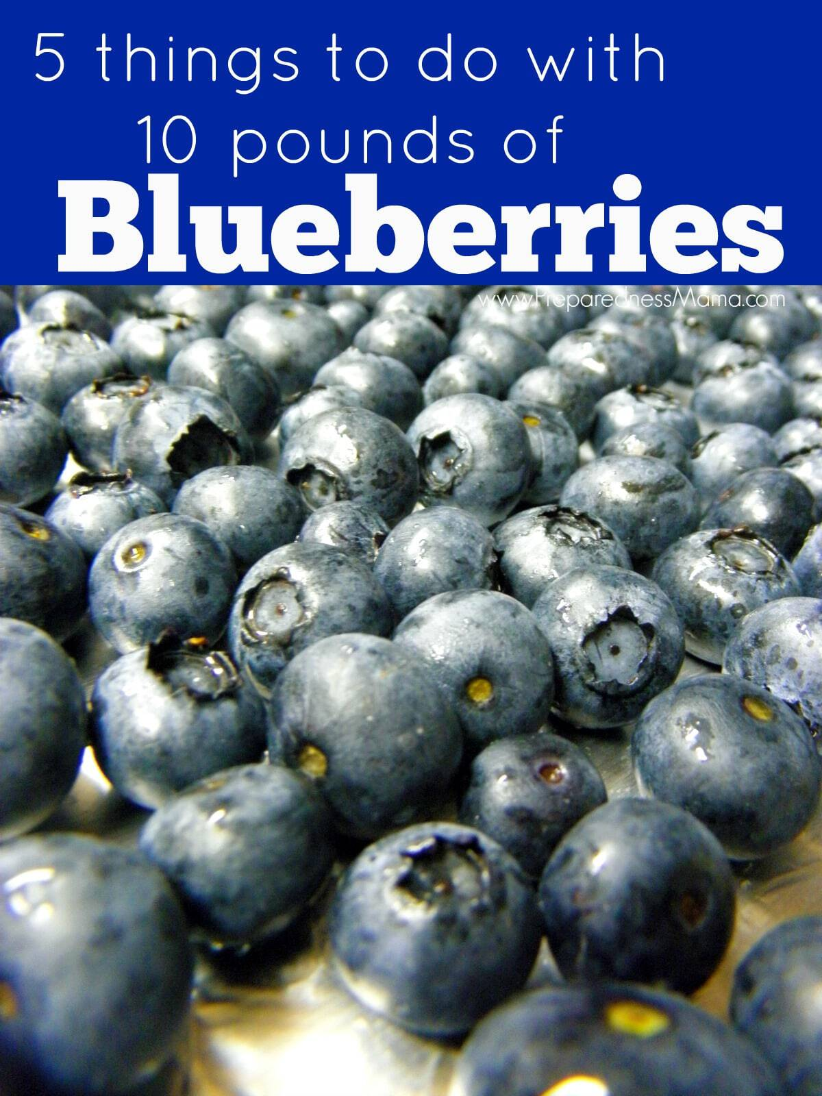 Make it easy for yourself: blueberry harvesting combines - making your own hands, factory options 26